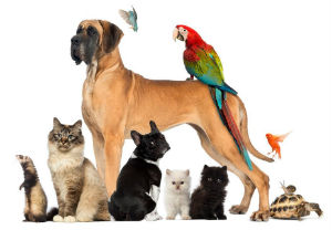 Brevard county, Florida pet sitter